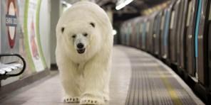 Polar-Bear-in-London4