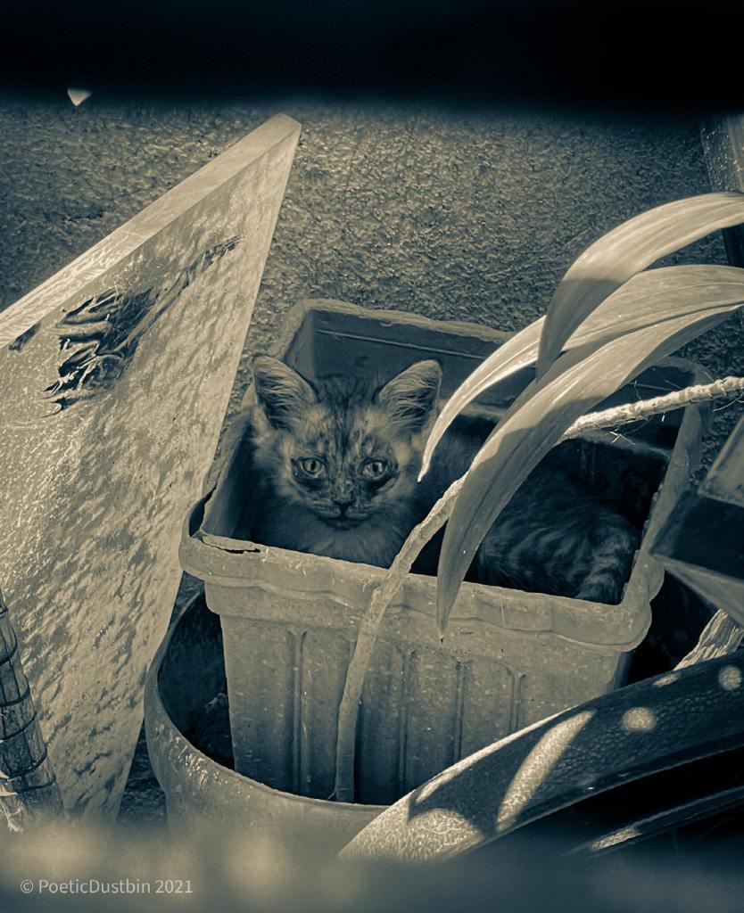 kitten in a pot