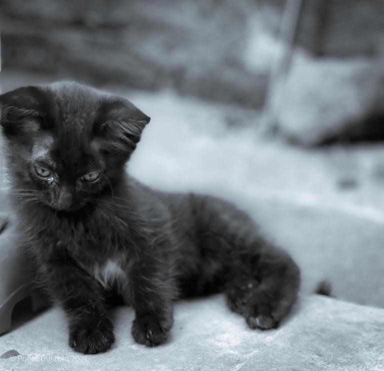 I am a kitten - poetic dustbin