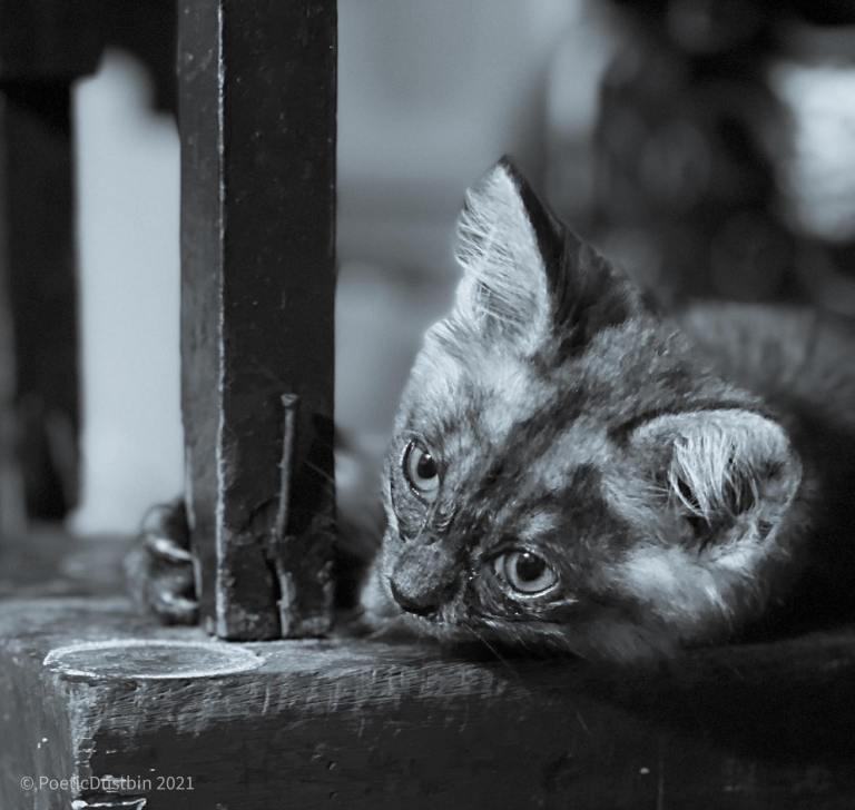 what is the matter here - cat photography - Poetic Dustbin