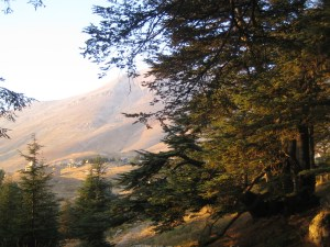 Mountains and Cedars in Lebanon by Joseph Younis