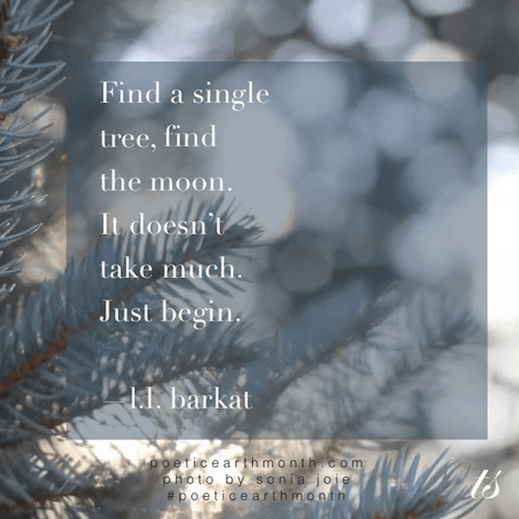 Find a single tree earth day and poetic earth month quote