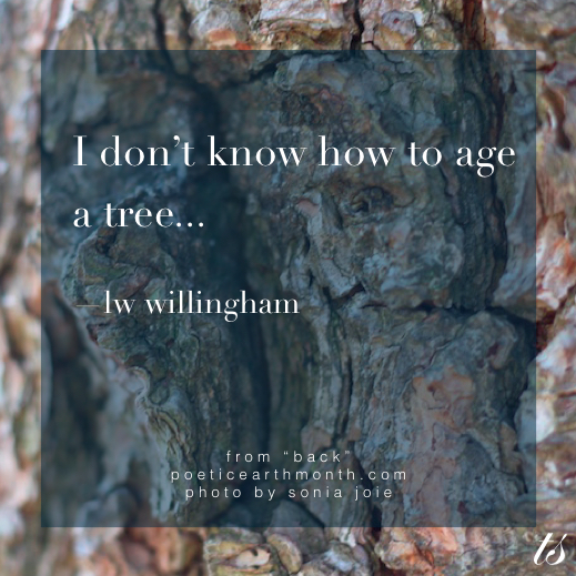 I don't know how to age a tree - LW Willingham