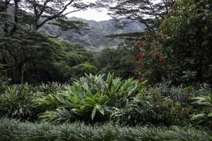 Lyon Arboretum in Manoa Valley