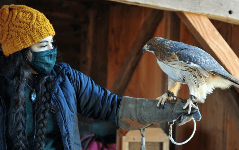 Tiffani Rushford with Red-tailed Hawk