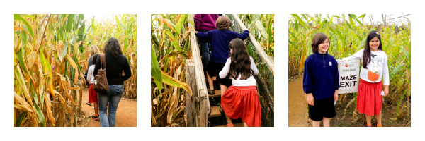 Lyman Orchards Corn Maze - poet in the pantry