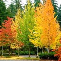 Autumn Haiku:  It's unavoidable!