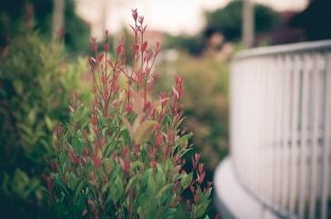 flower-690092_640