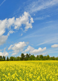 cropped_meadow_sky