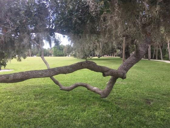 Tree Limb Bench