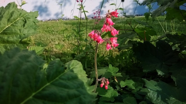Zoomed picture of pink flowers in a field with sky in the background