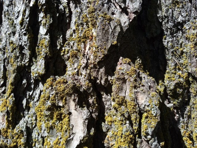close-up image of a tree bark