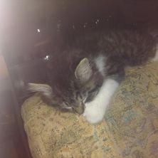 my kitties.....Baxter