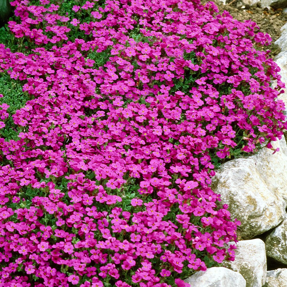 Mehrjährige Blumen Die Den Ganzen Sommer Blühen   lueduprep