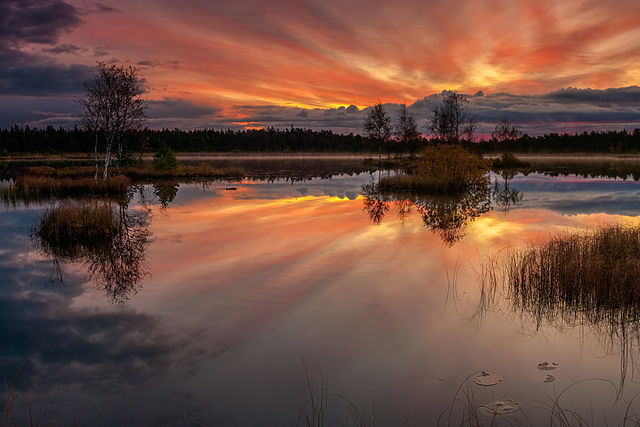 640px-Laanemaa_järv_Orkjärve_looduskaitsealal