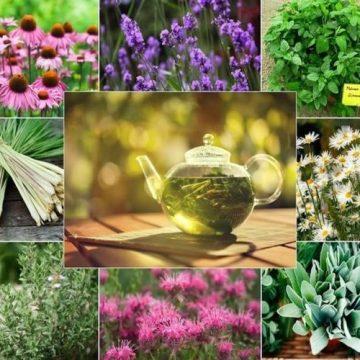 valoarea terapeutica plantelor medicinale