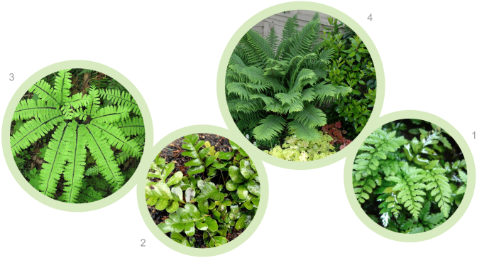 Back_Raised_plants_ferns