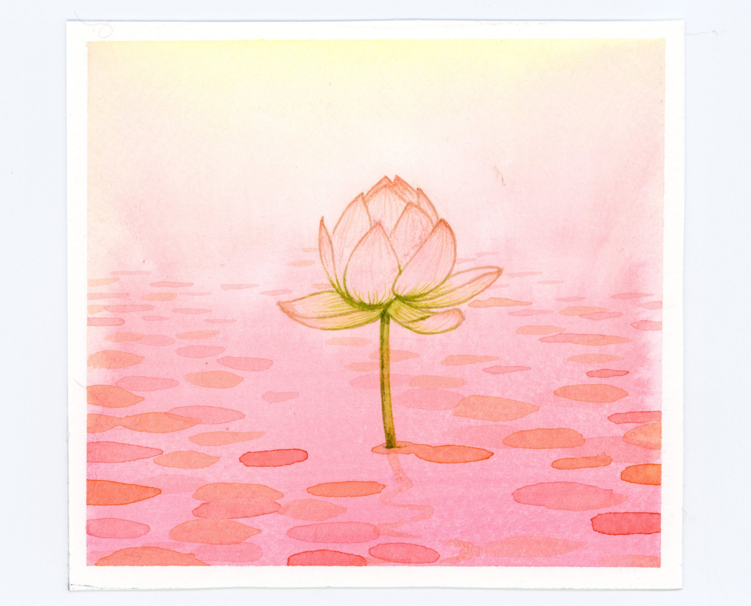 Peachy watercolor waterlily illustration