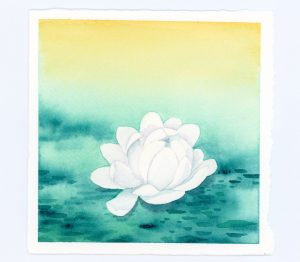 White waterlily watercolor illustration