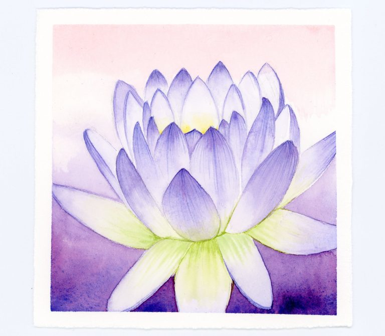 Waterlily watercolor and ink illustration art