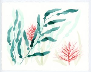 Seaweed and coral watercolor