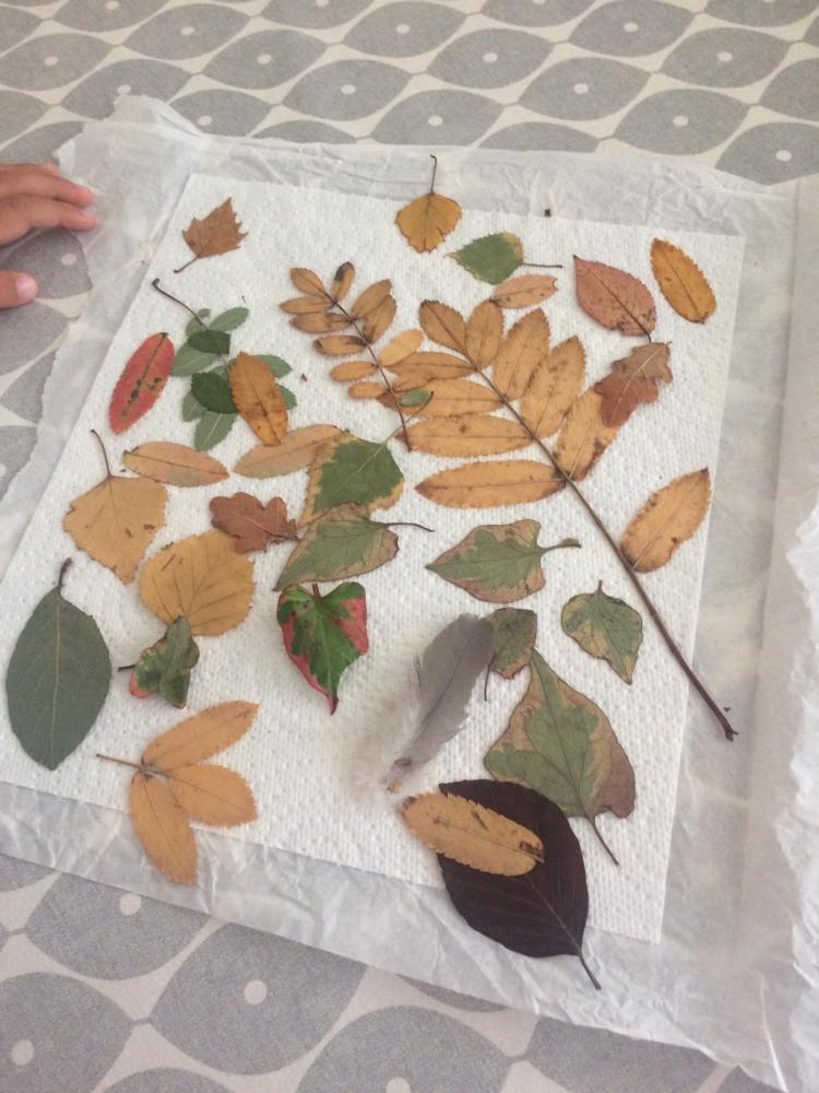 Pressing leaves between tissue paper pieces - place heavy books on top