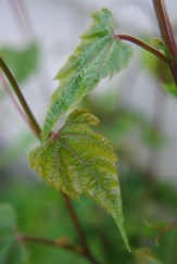 green20122009miscflowersjune2009garden 106