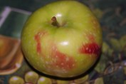 Apple from the cider mill
