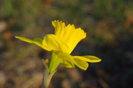 Spring2014AprilMisc 022