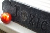 Mock stone/cement texture of this plaque complements the smooth skin of the tomato.