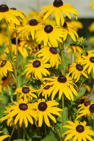 FlowersHiddenLakeGardenMisc 040