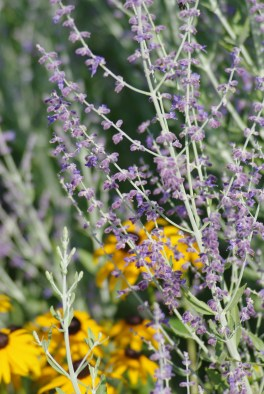 FlowersHiddenLakeGardenMisc 041