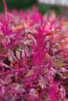 FlowersHiddenLakeGardenMisc 079