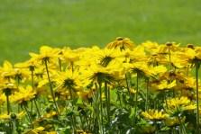 FlowersHiddenLakeGardenMisc 113