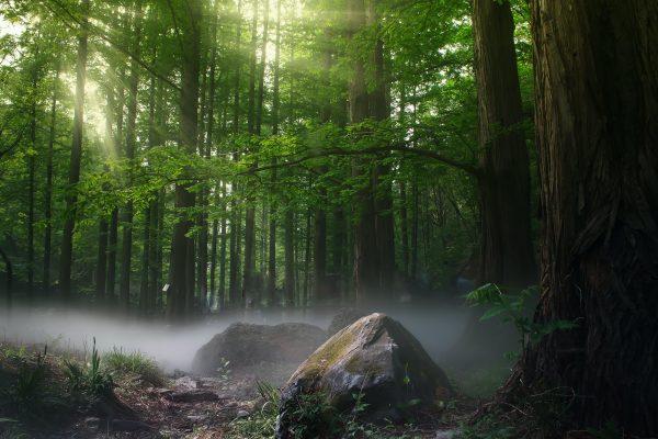 27 сентября – Воздвижение Господне, Ставров день