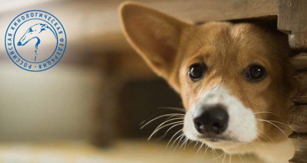 """Боязнь темноты, врачей и одиночества. Российские кинологи: """"И у собак есть фобии"""""""