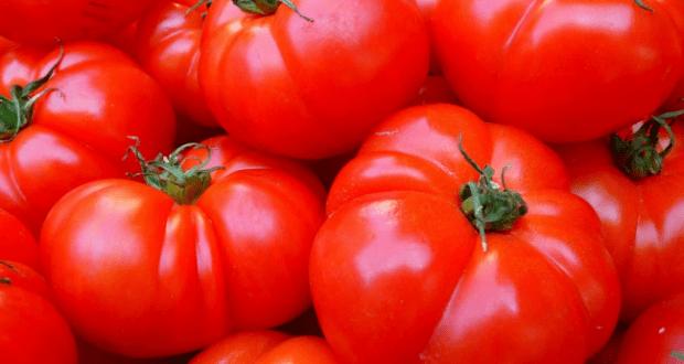 В Крыму подсчитали январский урожай томатов