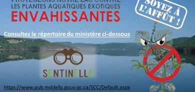 Protégeons notre lac contre les plantes aquatiques exotiques envahissantes