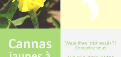 Don de cannas jaunes aux résidents de Pohénégamook