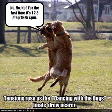 dancing-dogs