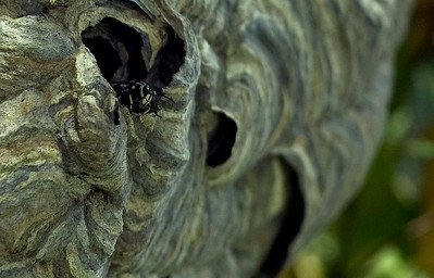 Found a major wasp nest in Babcock State Park