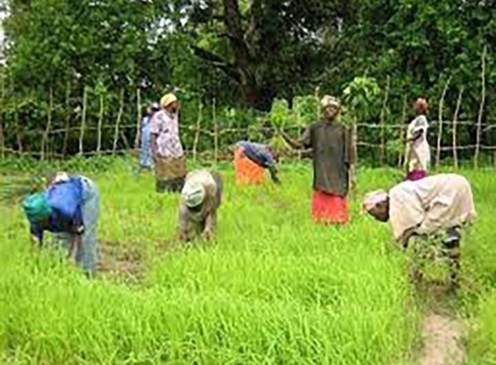 formation-techniques-culture-du-riz-gorgol-mauritanie