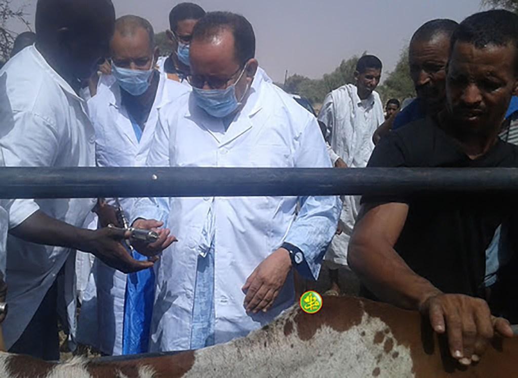 assaba-campagne-de-vaccination-du-cheptel-a-assaba-mauritanie