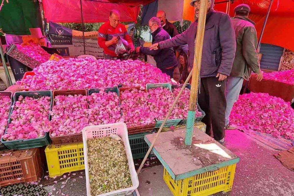 "Tunisie : le zhar, ""or blanc """