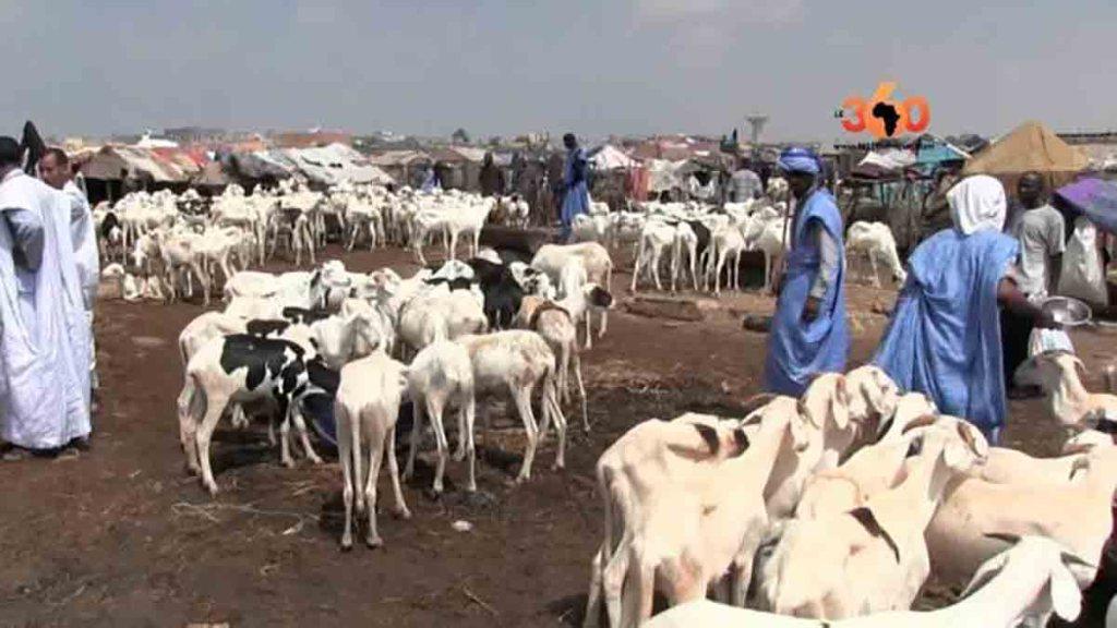 Flambée des prix du mouton de la tabaski
