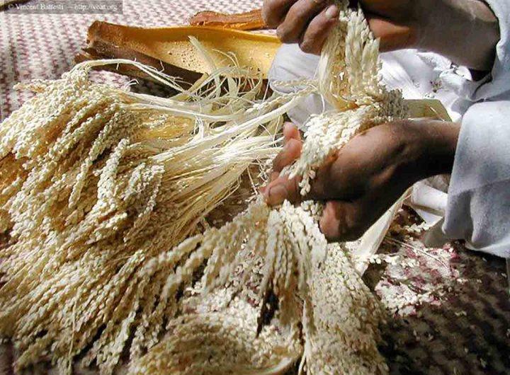 Réhabilitation du centre féminin de transformation des produits des palmiers à Tidjikja