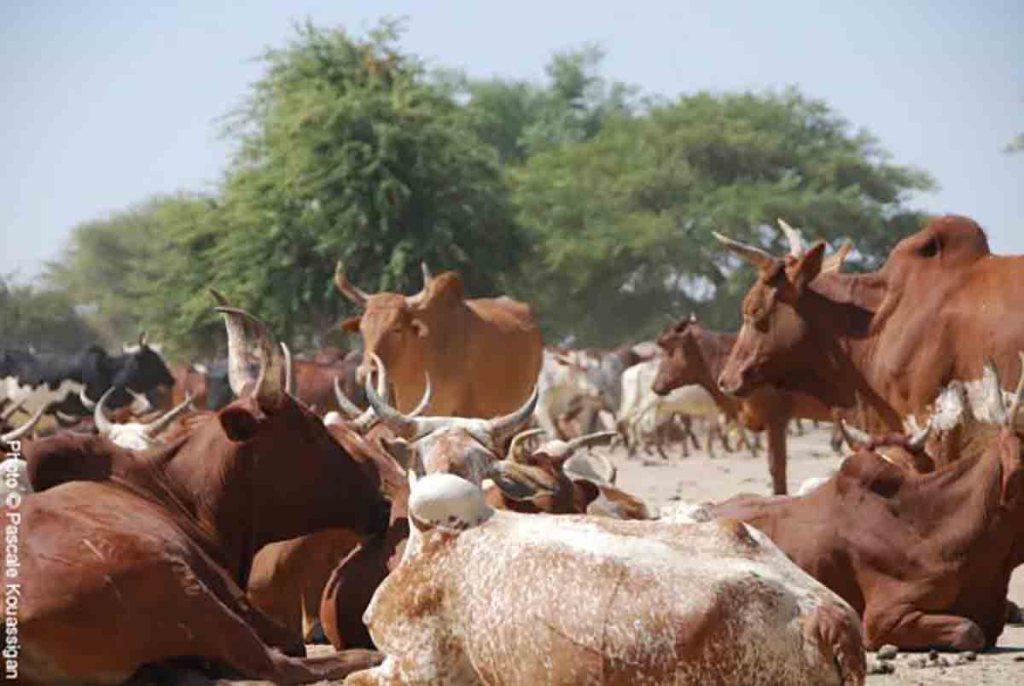 Mise en place d'une commission paritaire avec les promoteurs laitiers