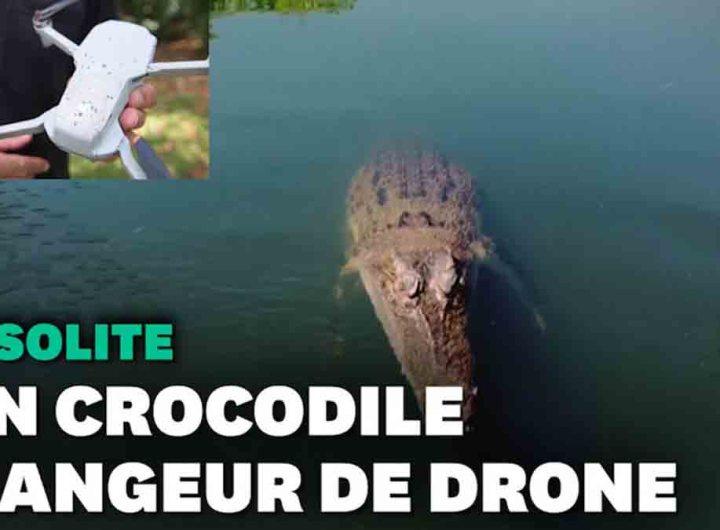 Un crocodile croque le drone d'une chaîne de télé en plein tournage