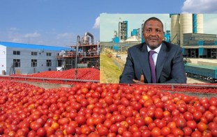 Image result for Dangote group tomato industry