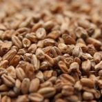 Weyermann ® Dark Wheat